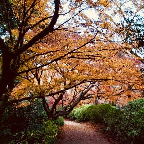 Shimizu Park