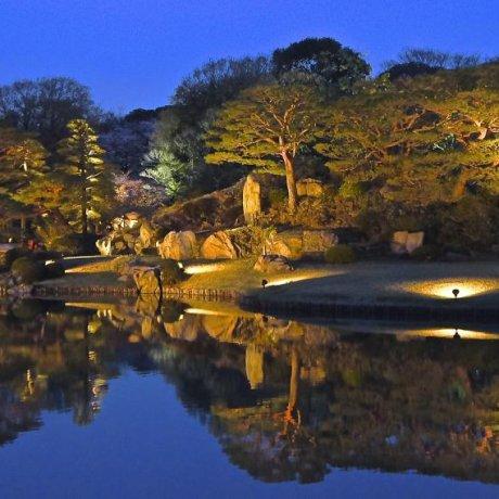 Rikugien Gardens Light Up