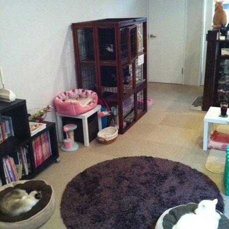 Coron Cat Cafe, Saga