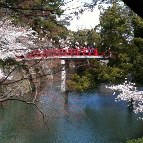 Cherry Blossoms of Okazaki Castle