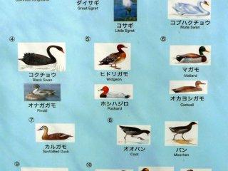 คุณสามารถชมนกและเป็ดชนิดต่างๆ รอบ ๆ บริเวณ