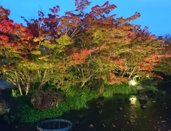 Nabana no Sato Winter Illuminations