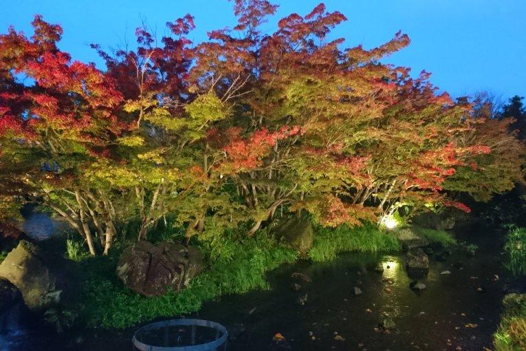 Зимняя иллюминация Набана-но-сато