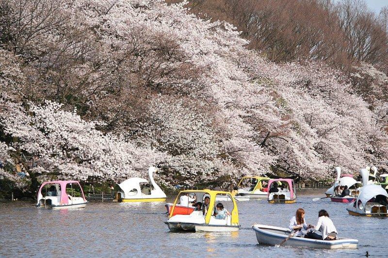 Inokashira Park - Spring