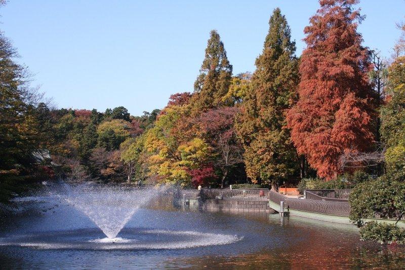 Inokashira Park - Autumn