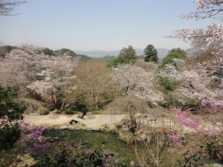 Like the waving sprays / of wisteria boughs / near the swift river at Yoshino / my love for you flows / in no common way.