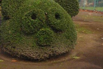 Topiary of a cute panda head