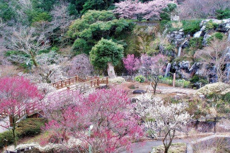 เทศกาลดอกพลัม Atami Baien