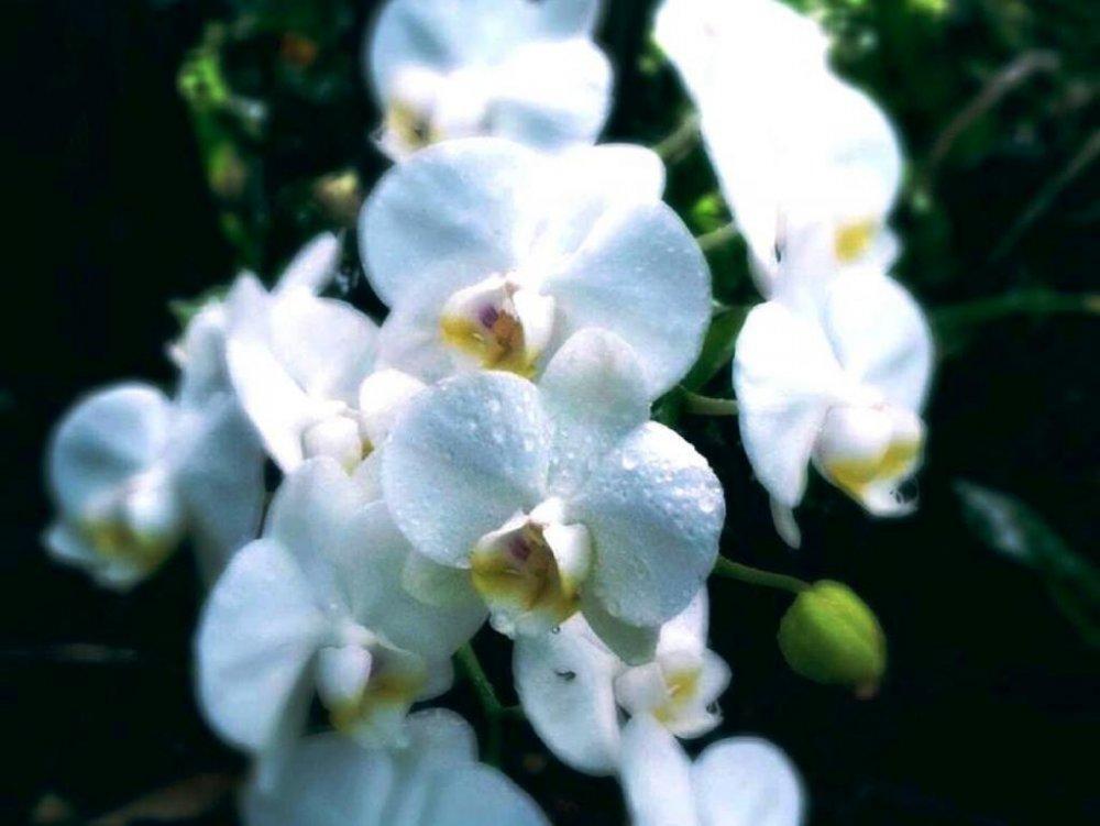 Hoa trắng rực rỡ lấp lánh trong ánh ban mai tại vườn Bios no Oka ở Okinawa
