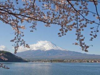 The classic view: Mount Fuji through the cherry blossoms