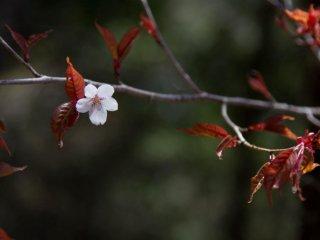 La dernière fleur