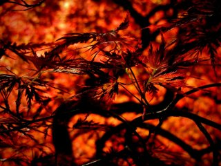 You don't have to wait for fall to see fiery colors