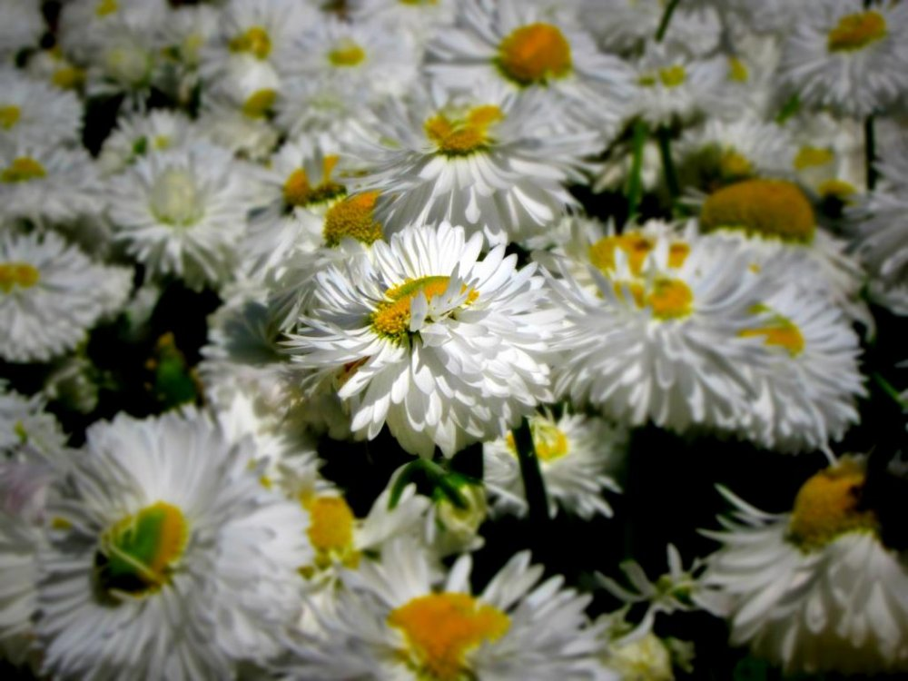 White daisies are a common sight in the mini-garden atop the island