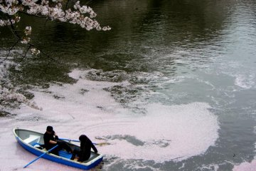 Taman Kitanomaru dan Sakura