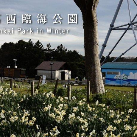 เทศกาลดอกแดฟโฟดิลที่สวน Kasai Rinkai