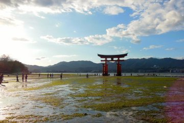 Miyajima in Photos