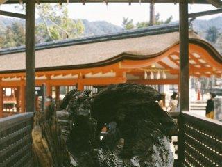 Sacred wood displayed in Itsukushima Shrine