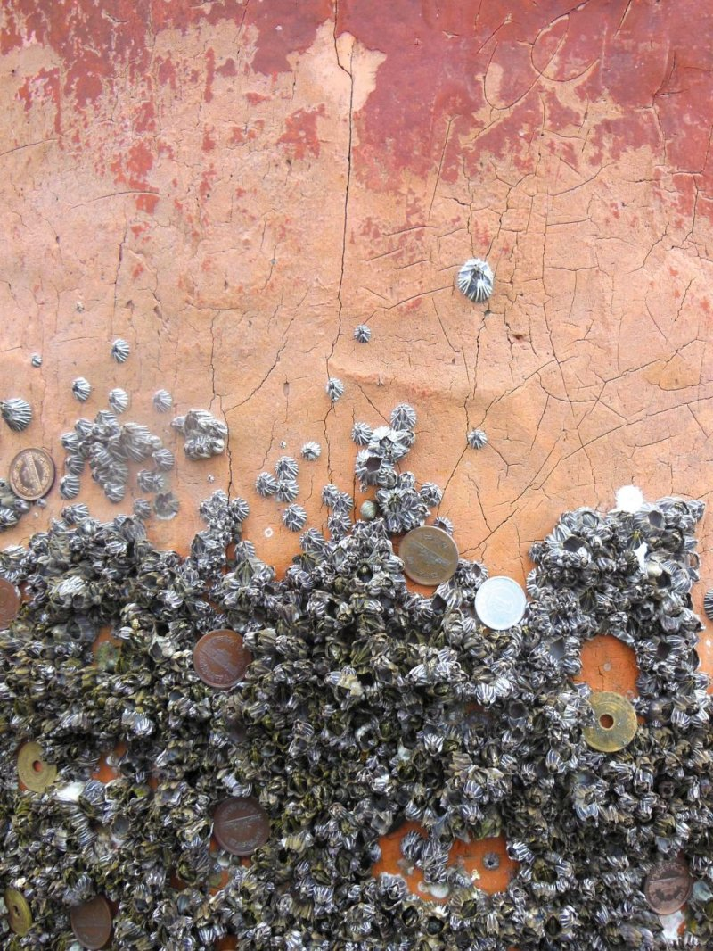 <p>Miyajima Shrine up close. People put coins in barnacles in the shrine.</p>