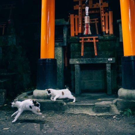 Кошки с горы тысячи ворот