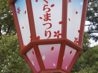 The Sakura Festival lanterns are lit up at night. They are supposed to be very beautiful; however, I had to return to Tokyo before that