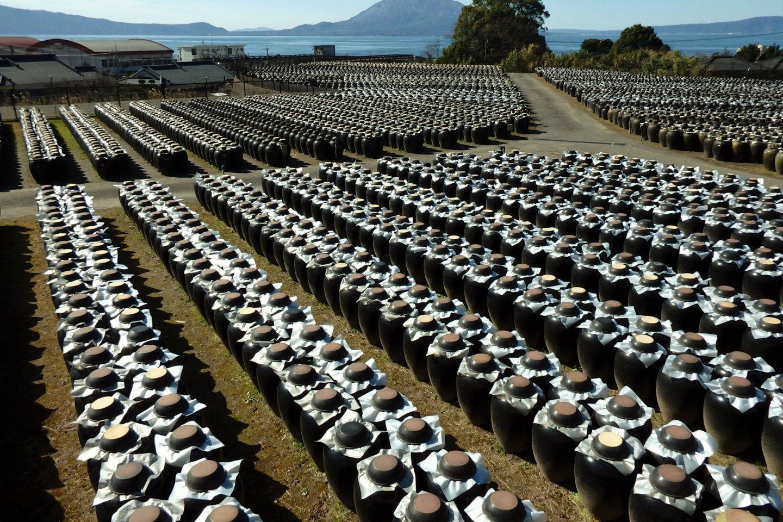 Tsubobatake overlooking Sakurajima
