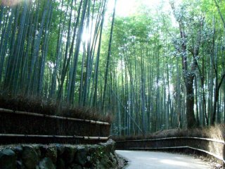 Passeie por uma floresta de bambu em Sagano Arashiyama apenas a 17 de comboio da estação de Quioto