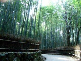 Прогулка по бамбуковому лесу в Сагано Арасияме