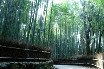 Stroll through a bamboo forest Sagano Arashiyama just 17 minutes ride from Kyoto Station