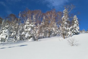 Snow covered trees near the top