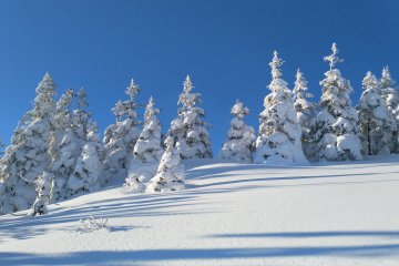 More snow covered trees
