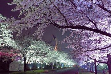 Выставочный парк Экспо в Осаке