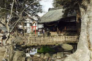 Shiratori Shrine and the old Zelkova Tree