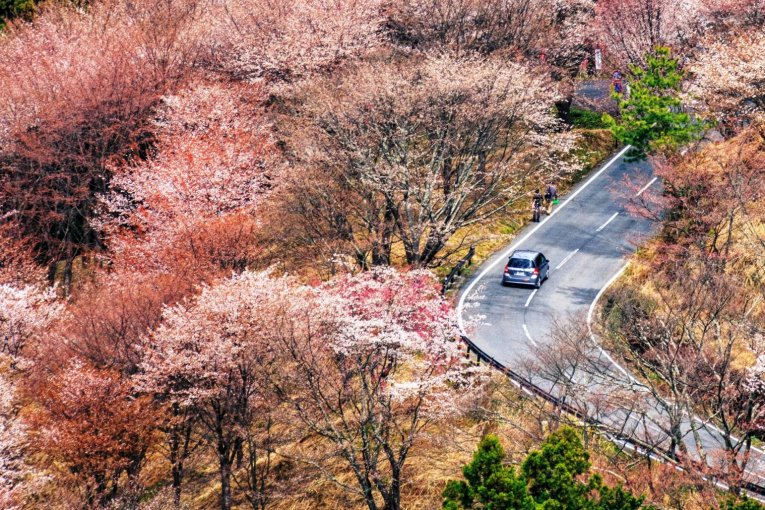 Sakura on Mount Yoshino