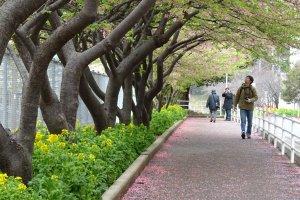 ทางเดินพรมกลีบดอกไม้สีชมพู