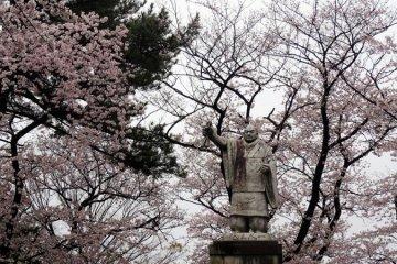 ซากุระที่วัดอิเคะกะมิ ฮอนมอน-จิ (Ikegami Honmon-ji)