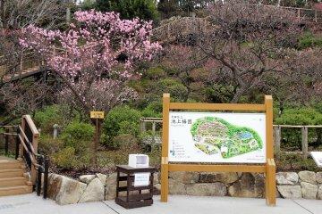 สถานที่ชมดอกซากุระในเขตโอตะ โตเกียว