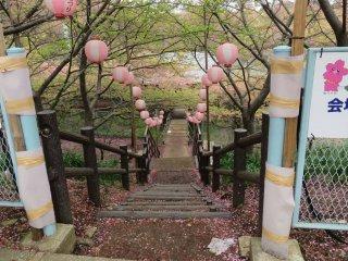 โคมไฟงานเทศกาลกับกลีบดอกซากุระ