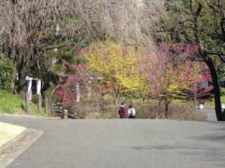 สีสันของต้นเดือนมีนาคม