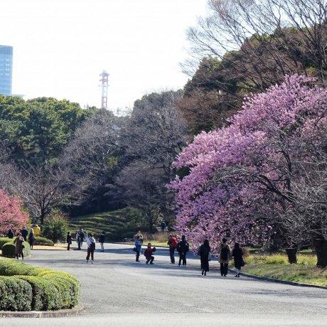 ดอกไม้ในสวนสวยใจกลางกรุงโตเกียว