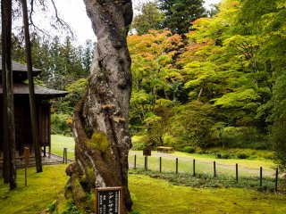 It was early autumn in Nikko at the time of my visit