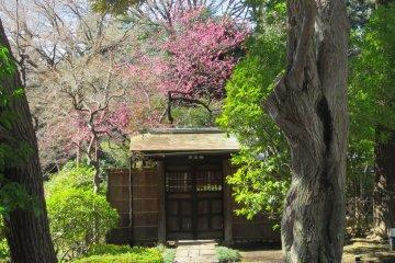 สวนญี่ปุ่นของศาลเจ้ายะสุคุนิ