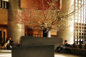 โรงแรมเซรูลีน ทาวเวอร์ โตเกียวในฝั่งชิบุยะตะวันตก