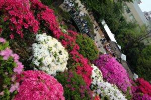 Белые, розовые, фиолетовые...