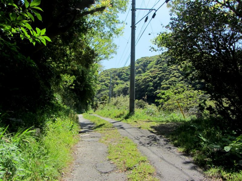 The start of the forest trail