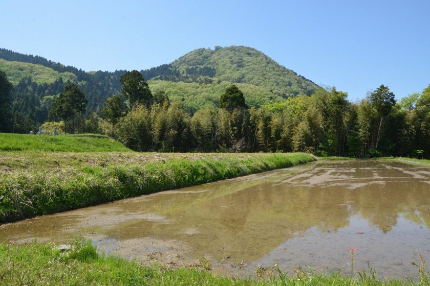 高須山。標高200メートル地点での撮影なので低く見えるが実際は438メートルの高さである