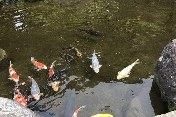Пруд с родниковой водой в парке реки Какита