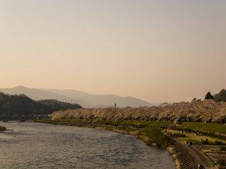 Bên bờ sông Hinokinai River, Kakunodate, Akita, những cây hoa anh đào đua nhau khoe sắc. Đây là một trong những điểm ngắm hoa khá nổi tiếng mỗi dịp xuân về