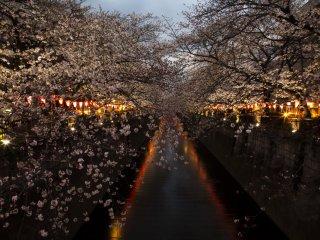 Nakameguro, Tokyo, một trong những điểm đến nổi tiếng vào mùa xuân. Tại đây có những hàng cây anh đào thơ mộng soi mình dưới dòng sông
