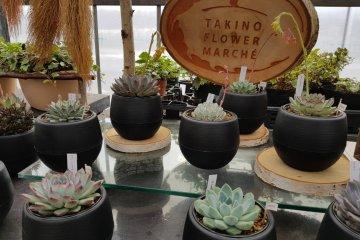 Takino Flower Marché