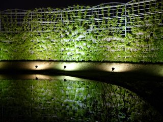 White wisteria on huge trellis reflected on the water